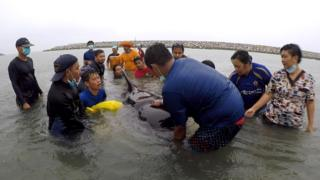 80 poşet yutan yavru balina öldü