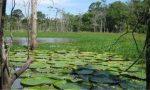Barajlar Amazon'a 'kalıcı hasar verebilir'