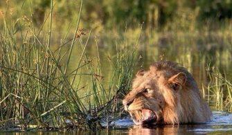 Hindistan'da vahşi hayvanlar 79 kişiyi öldürdü