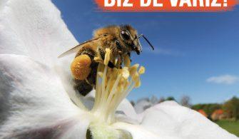 Arıları kurtaralım!