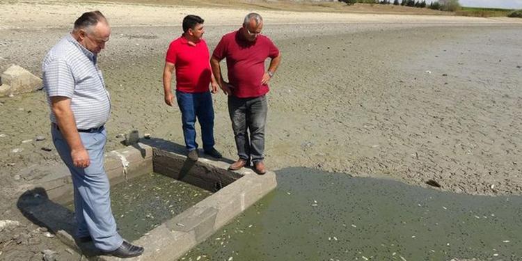 yurek yakan olay binlerce balik susuzluktan oldu 1 - Yürek yakan olay! Binlerce balık susuzluktan öldü!