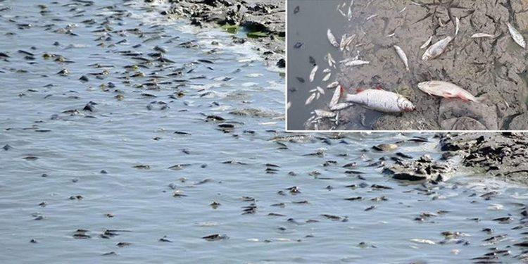 Yürek yakan olay! Binlerce balık susuzluktan öldü!