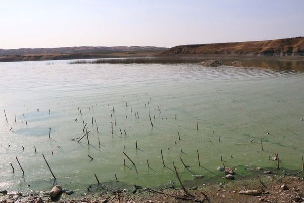 ataturk baraj golu nde korkutan goruntu uyari yapildi haberler 5 - Atatürk Baraj Gölü'nde tedirgin eden görüntü! Uyarı yapıldı